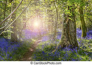 Sunshine through the leaves in bluebell woods - Dappled...