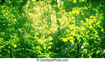 Sunshine through the trees. HD 1080