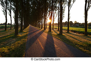 sunshine through tree rows by road after sunrise