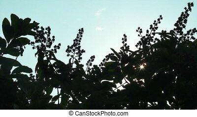 sunshine time lapse