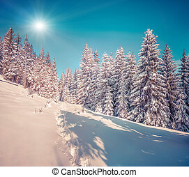 Suny winter scene in the mountain forest