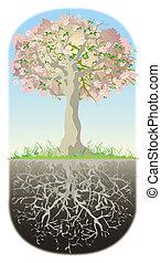 suo, albero, radici