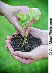 suolo, fiore, mettere, femmina porge