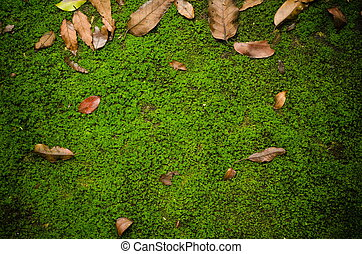 suolo, percorso, con, muschio