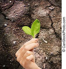 suolo, pianta, holding donna, mano