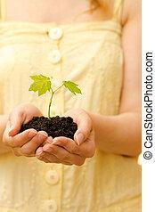 suolo, pianta, mani