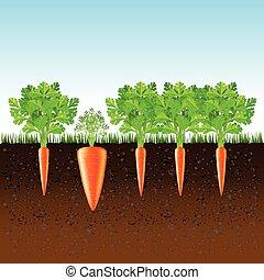 suolo, vettore, crescente, carote, fondo
