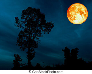 super blue blood moon over silhouette tree cerulean sky