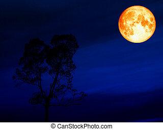 super blue blood moon over silhouette tree dark blue sky