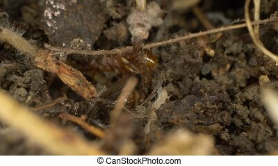 Super close-up, detailed. brown ants in an anthill. copy space.