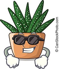 Super cool character small zebra cactus plant on pot