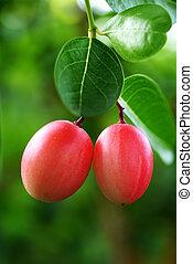 Super fruit on tree.