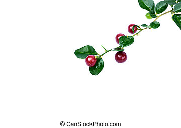 Super fruit on white background