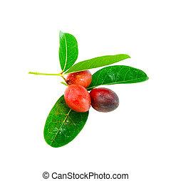 Super fruit (Scientific name Carissa carandas Linn.) on white background.