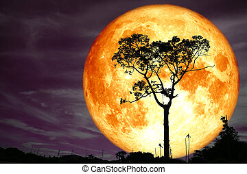 super full blood moon back silhouette tree and colorful sky