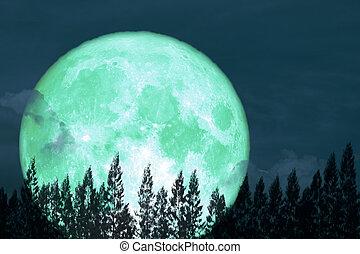 super full egg moon back on silhouette pine on night the sky