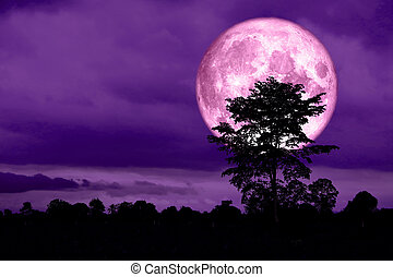 super full pink moon back on silhouette tree in night sky