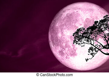 super full pink moon back silhouette tree and colorful sky