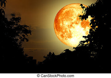 super full yellow moon back silhouette tree and cloud sky