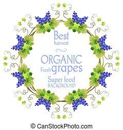 Super grape frame