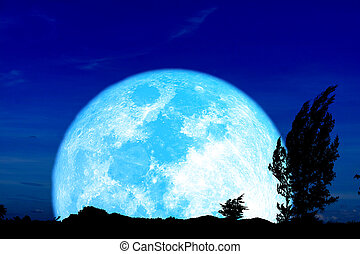 Super harvest blue moon and silhouette pine trees in the night sky