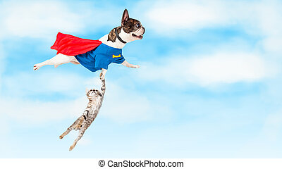 Super Hero Dog Flying Over White - Funny conceptual photo of...