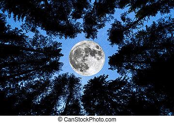 super, lua, árvores pinho, silueta