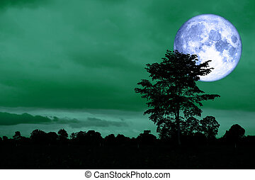 super moon back on silhouette tree in night green sky