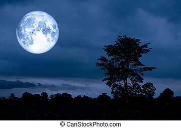 super moon on background and silhouette tree in night sky