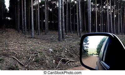 Super slow motion of pine tree forest and car mirror - Car...