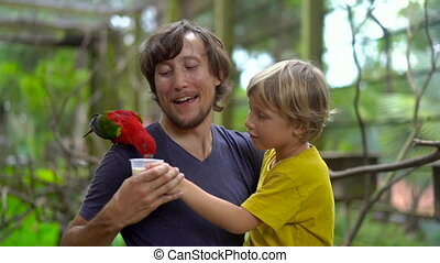 Super slowmotion shot of a father and son in a bird park feed a red parrot sitting on father's shoulder in with a milk