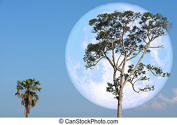 super strawberry moon on night sky back over silhouette tree