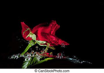 superficie, confuso, agua, rosas, Plano de fondo, rojo