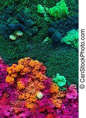 superficie, moss-grown, liquen