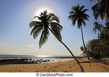 superiore, spiaggia palma, albero, mattina