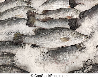 supermarket.giant, lates, mariscos, congelación, seabass, ...