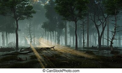 Supernatural fairy lights in swampy night forest