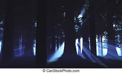 Supernatural Forest Lightrays 1