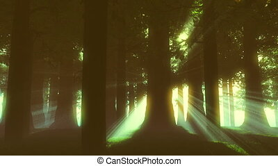 Supernatural Forest Lightrays 2