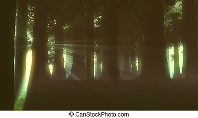 Supernatural Forest Lightrays 4