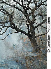 Suppression of forest fire 52