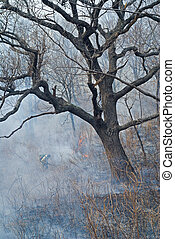 Suppression of forest fire 59
