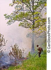 supresión, de, fuego del bosque, 76