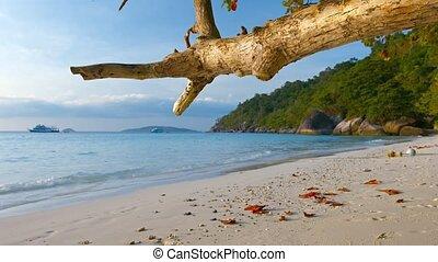 sur, arbre, exotique, noueux, branche, pendre, plage