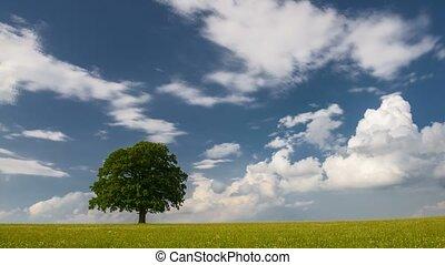 sur, arbre, unique, nuages, ciel bleu, pré, en mouvement