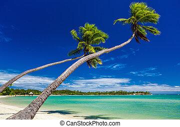 sur, arbres, abrutissant, paume, lagune, pendre, îles, fidji