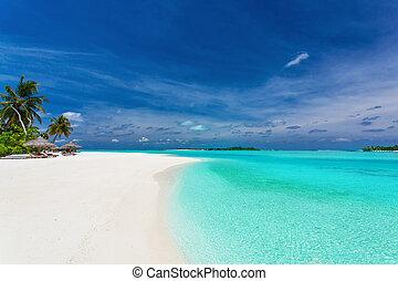 sur, arbres, abrutissant, paume, lagune, plage blanche, sablonneux