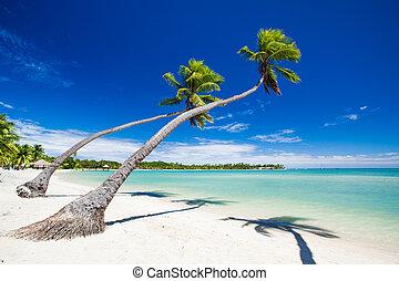 sur, arbres, exotique, abrutissant, paume, lagune, pendre