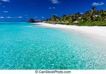 sur, arbres, paume, lagune, plage blanche, sablonneux