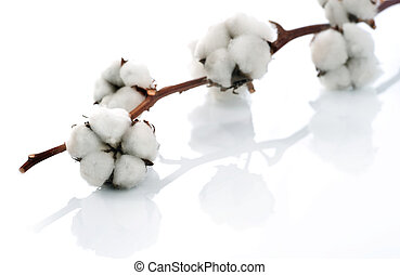 sur, blanc, coton